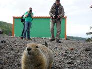 Пушистое животное Камчатского края