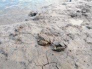 Лягушки в грязи